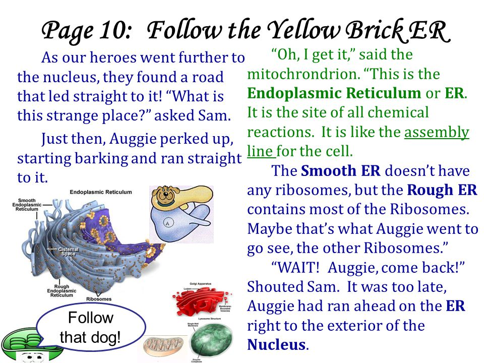 Page 10: Follow the Yellow Brick ER