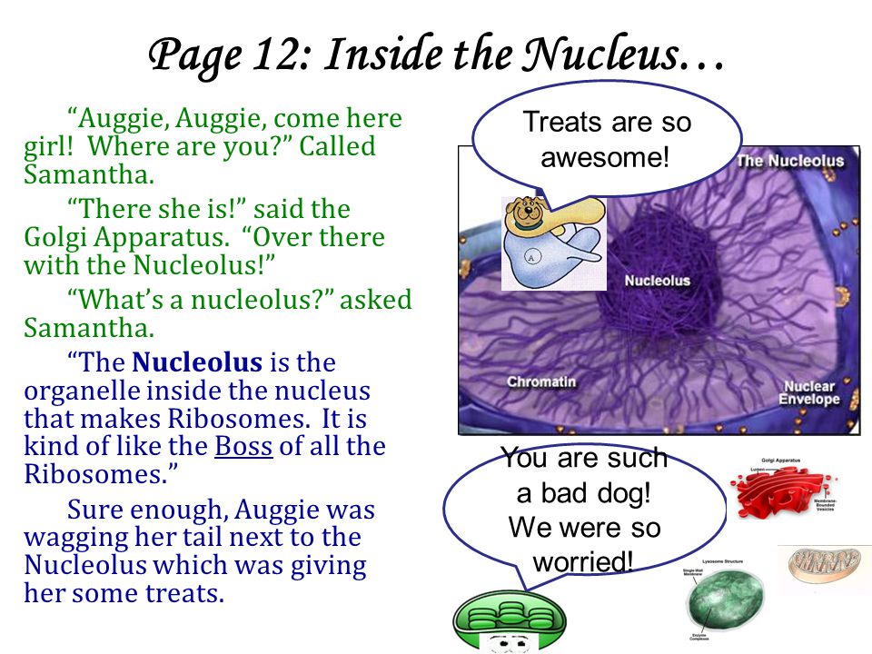 Page 12: Inside the Nucleus…