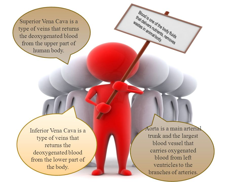 Superior Vena Cava is a type of veins that returns the deoxygenated blood from the upper part of human body.