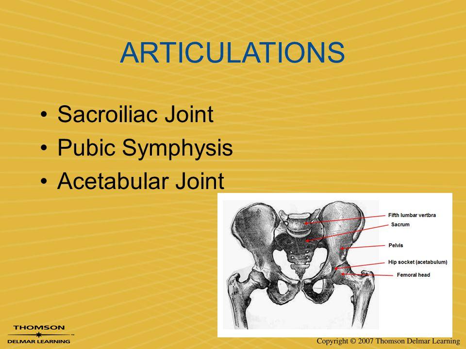 ARTICULATIONS Sacroiliac Joint Pubic Symphysis Acetabular Joint