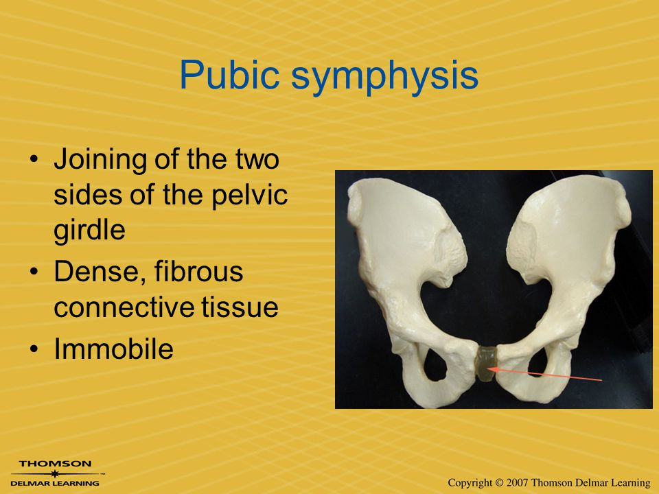 Pubic symphysis Joining of the two sides of the pelvic girdle