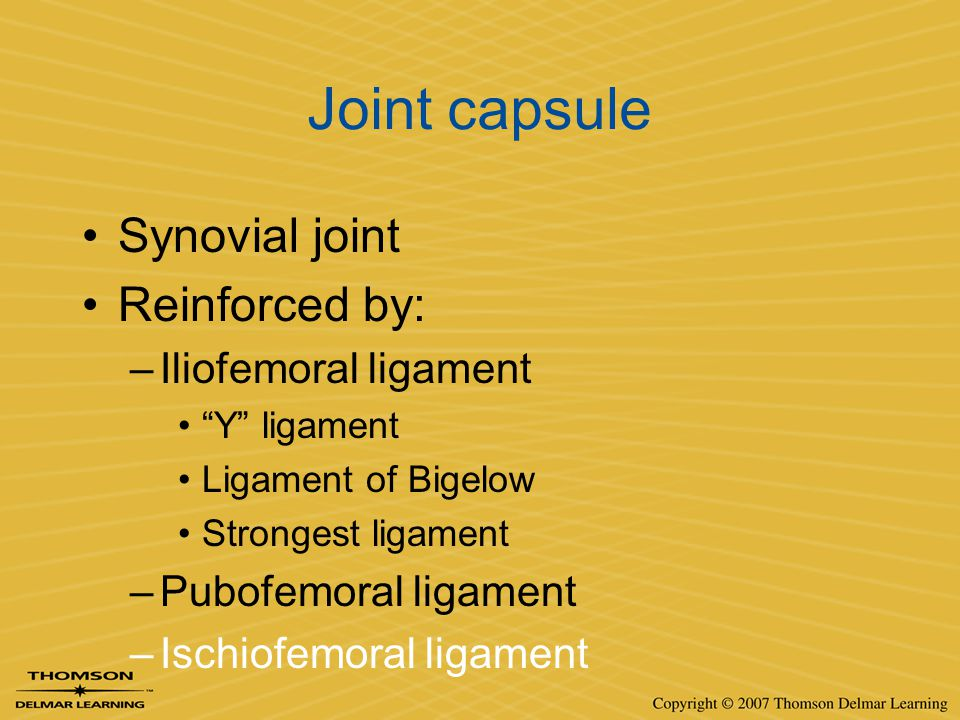 Joint capsule Synovial joint Reinforced by: Iliofemoral ligament