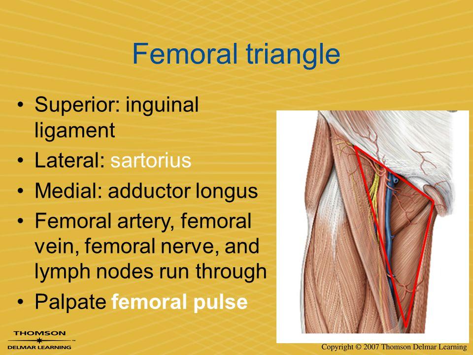 Femoral triangle Superior: inguinal ligament Lateral: sartorius