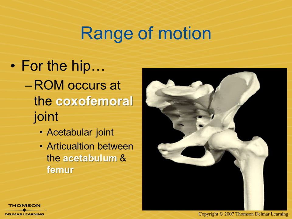 Range of motion For the hip… ROM occurs at the coxofemoral joint