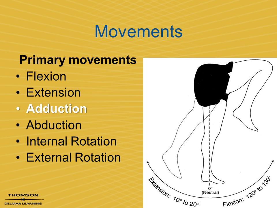 Movements Primary movements Flexion Extension Adduction Abduction