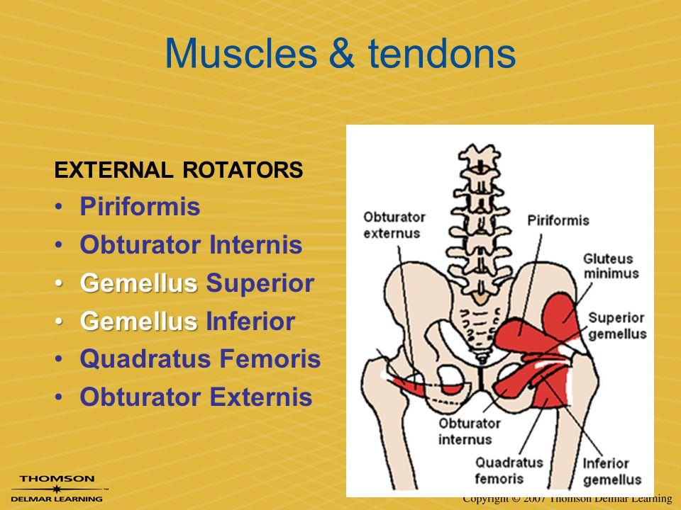 Muscles & tendons Piriformis Obturator Internis Gemellus Superior