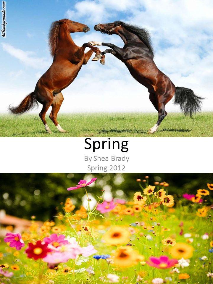 Spring By Shea Brady Spring 2012