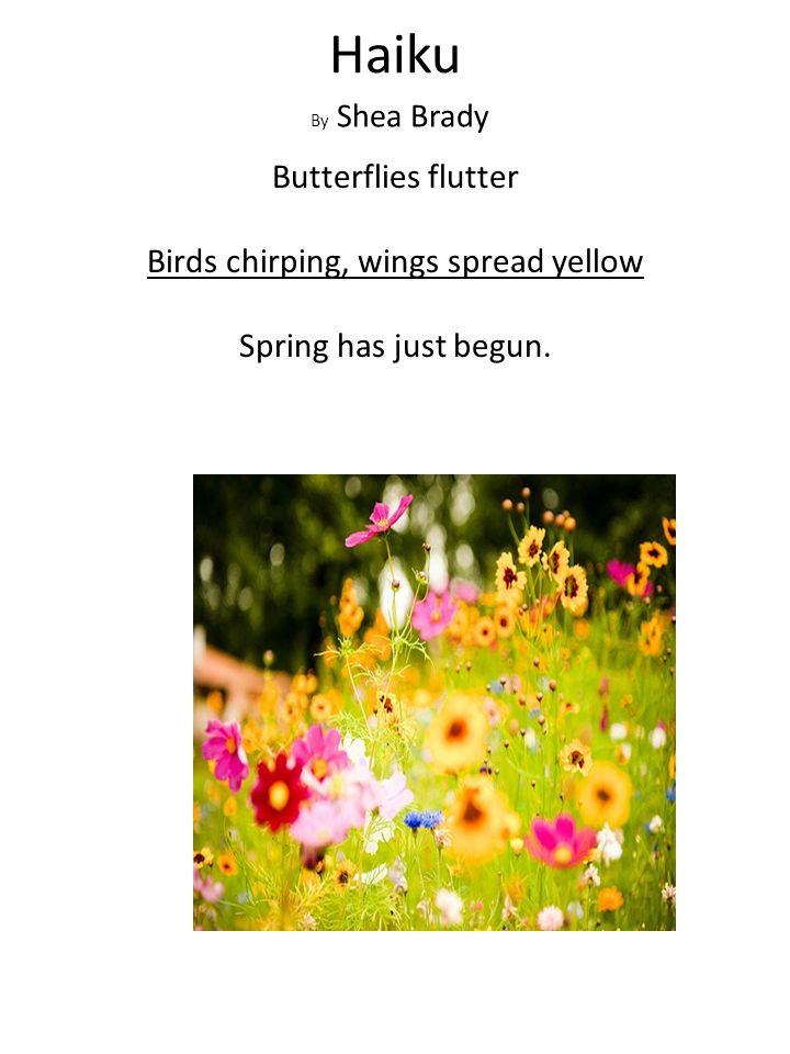 Haiku By Shea Brady Butterflies flutter Birds chirping, wings spread yellow Spring has just begun.