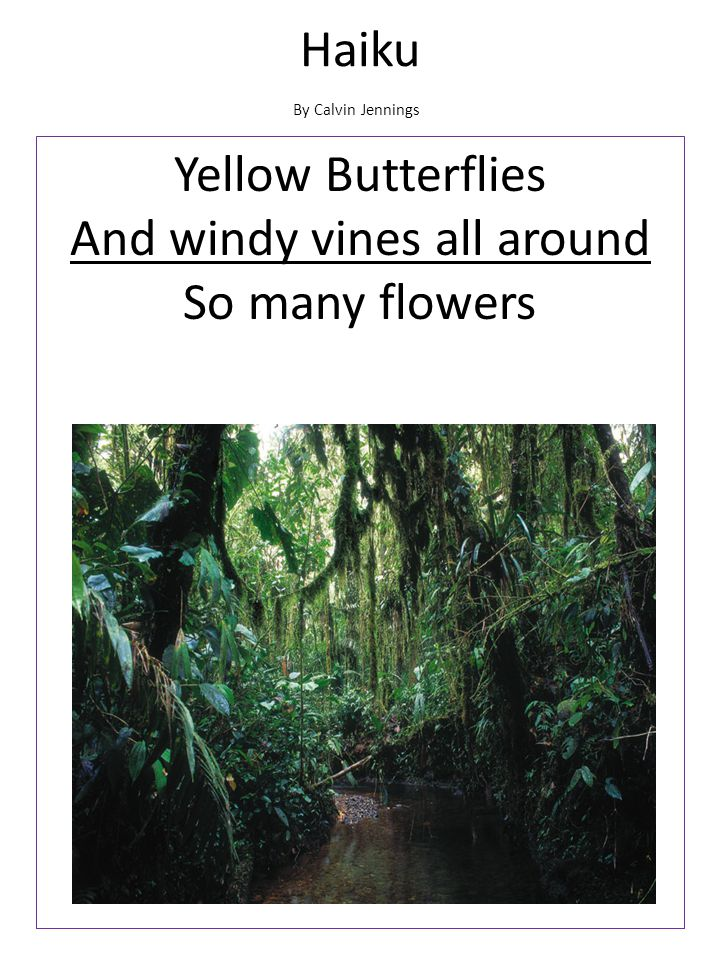 Yellow Butterflies And windy vines all around So many flowers