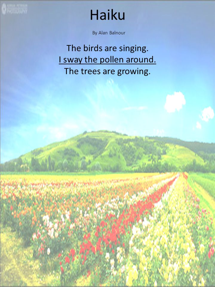 Haiku By Alan Balnour The birds are singing. I sway the pollen around. The trees are growing.