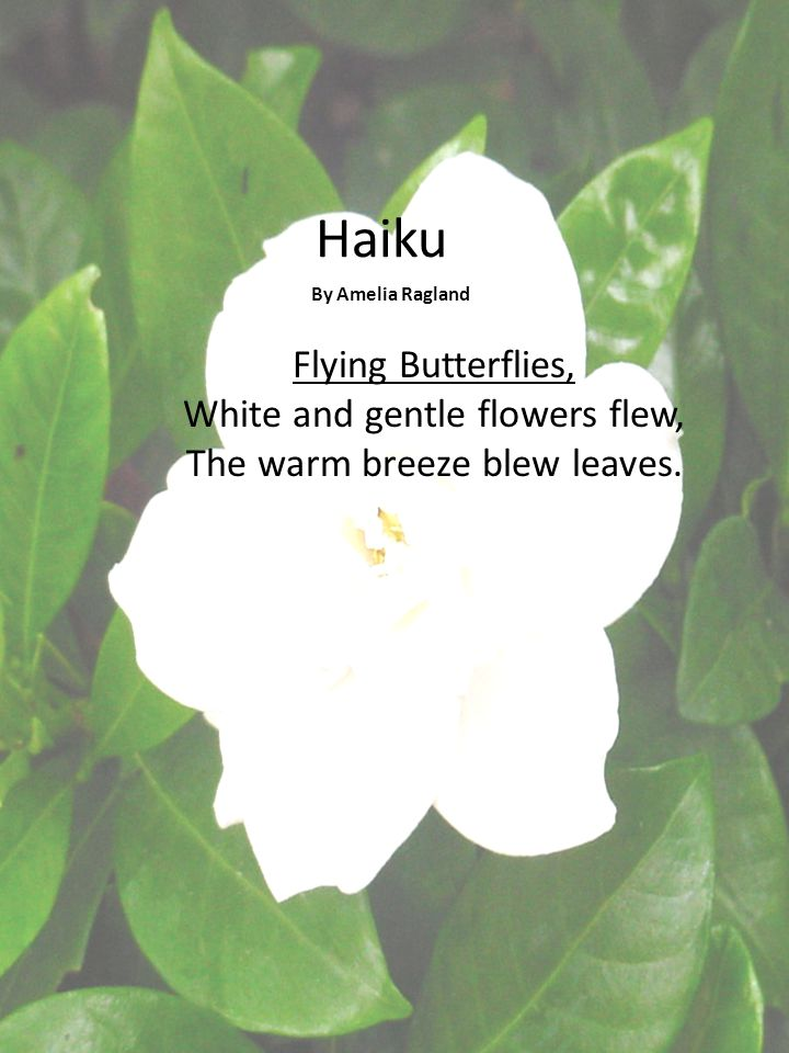 Haiku By Amelia Ragland.