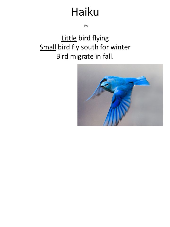 Haiku By Little bird flying Small bird fly south for winter Bird migrate in fall.