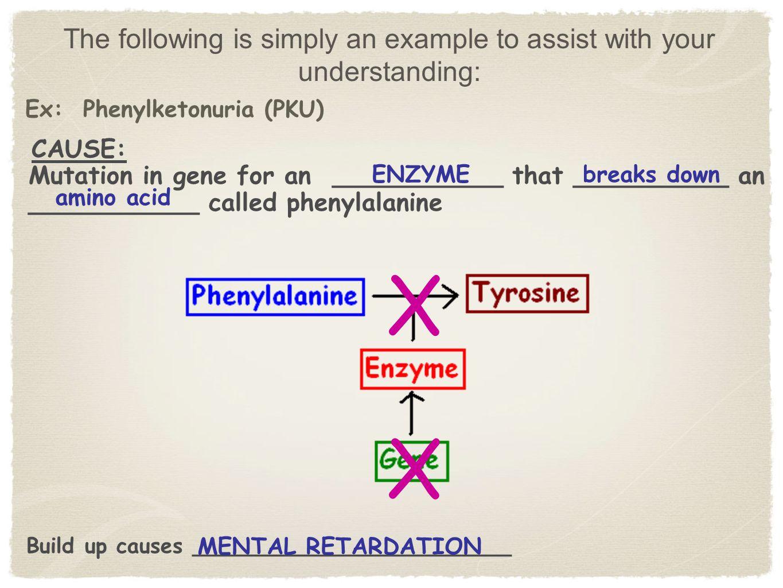 Ex: Phenylketonuria (PKU)