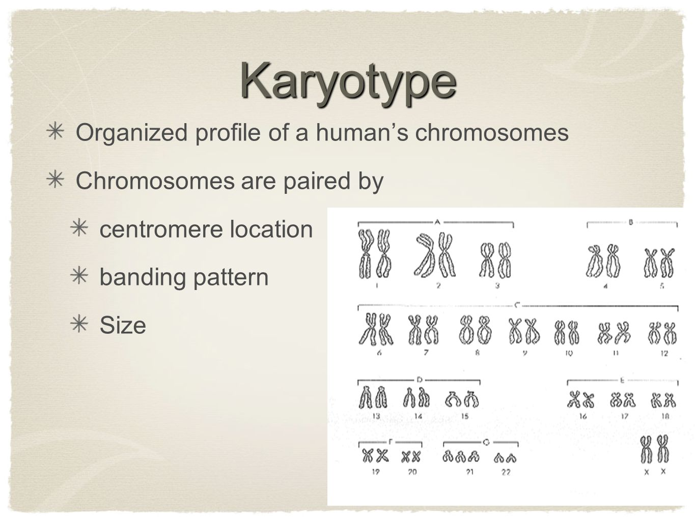 Karyotype Organized profile of a human's chromosomes