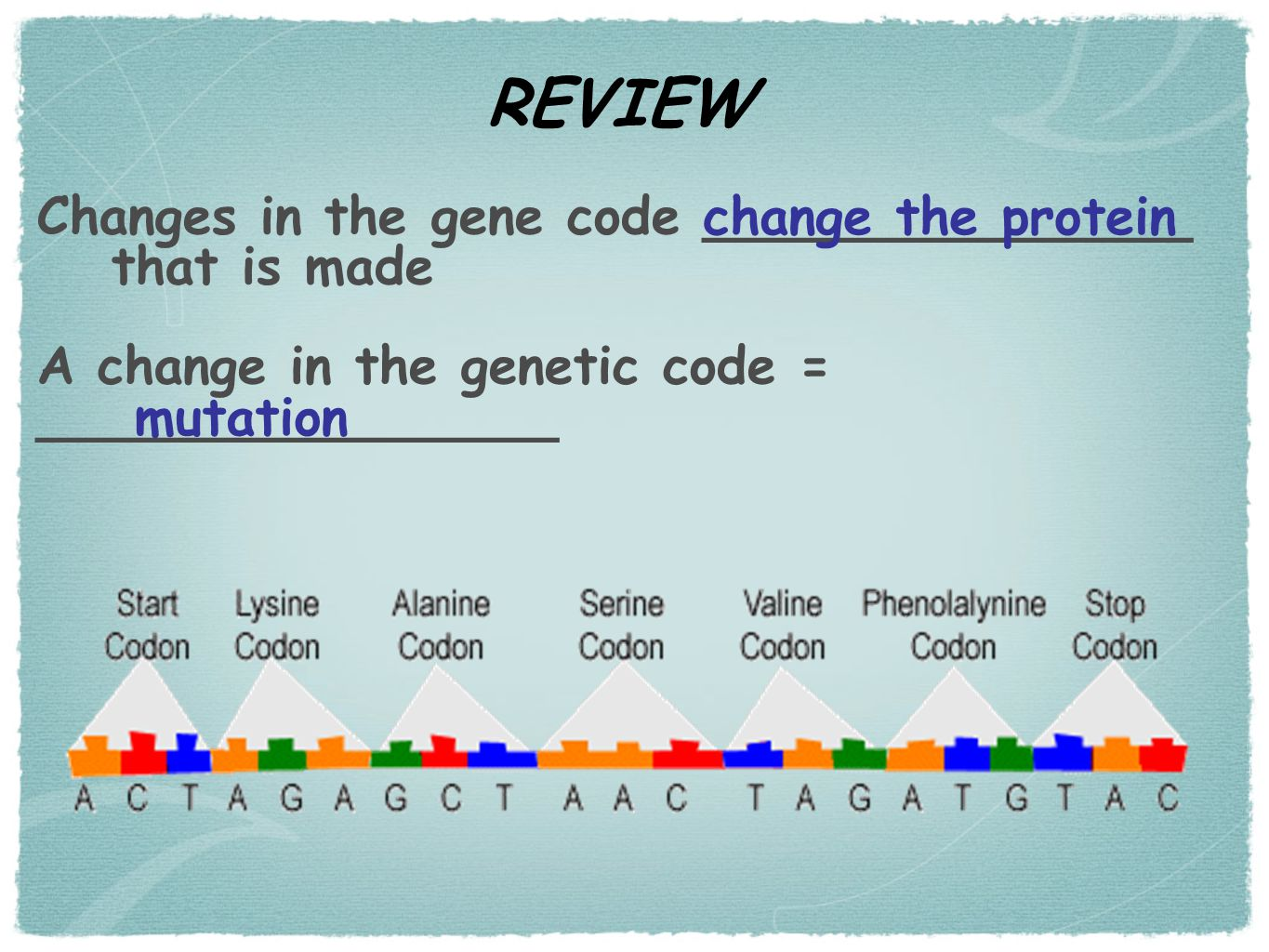 REVIEW Changes in the gene code _______________ that is made