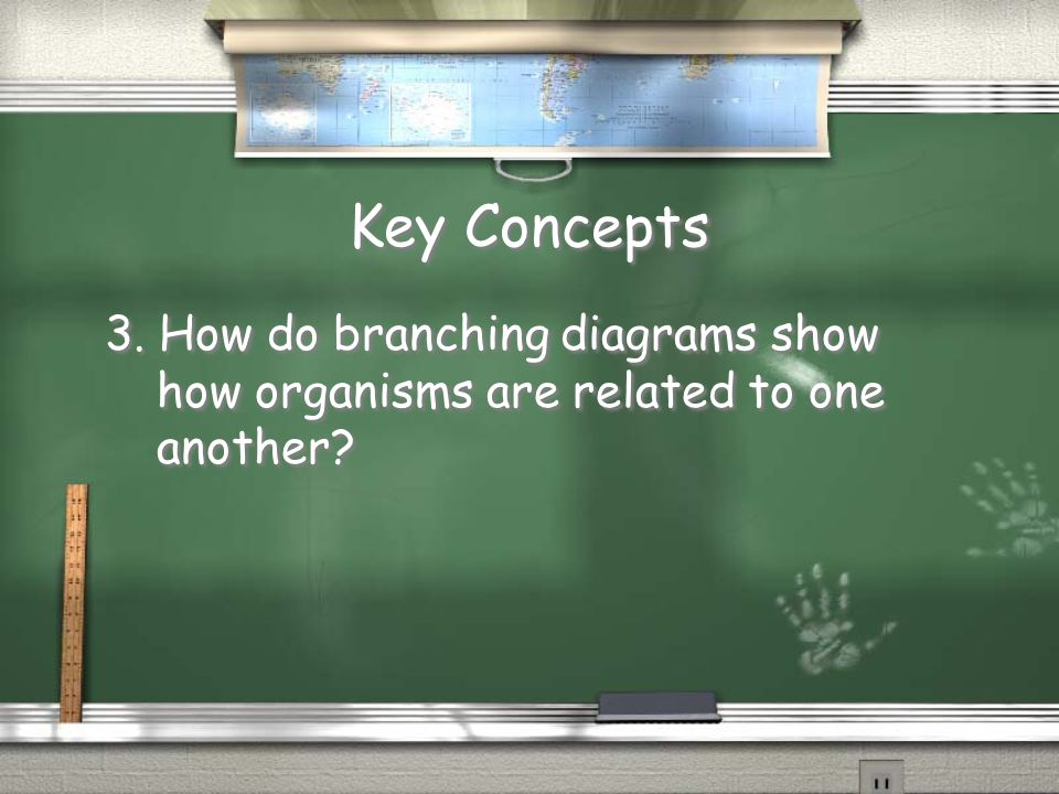 Key Concepts 3. How do branching diagrams show how organisms are related to one another