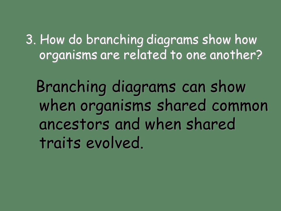 3. How do branching diagrams show how organisms are related to one another