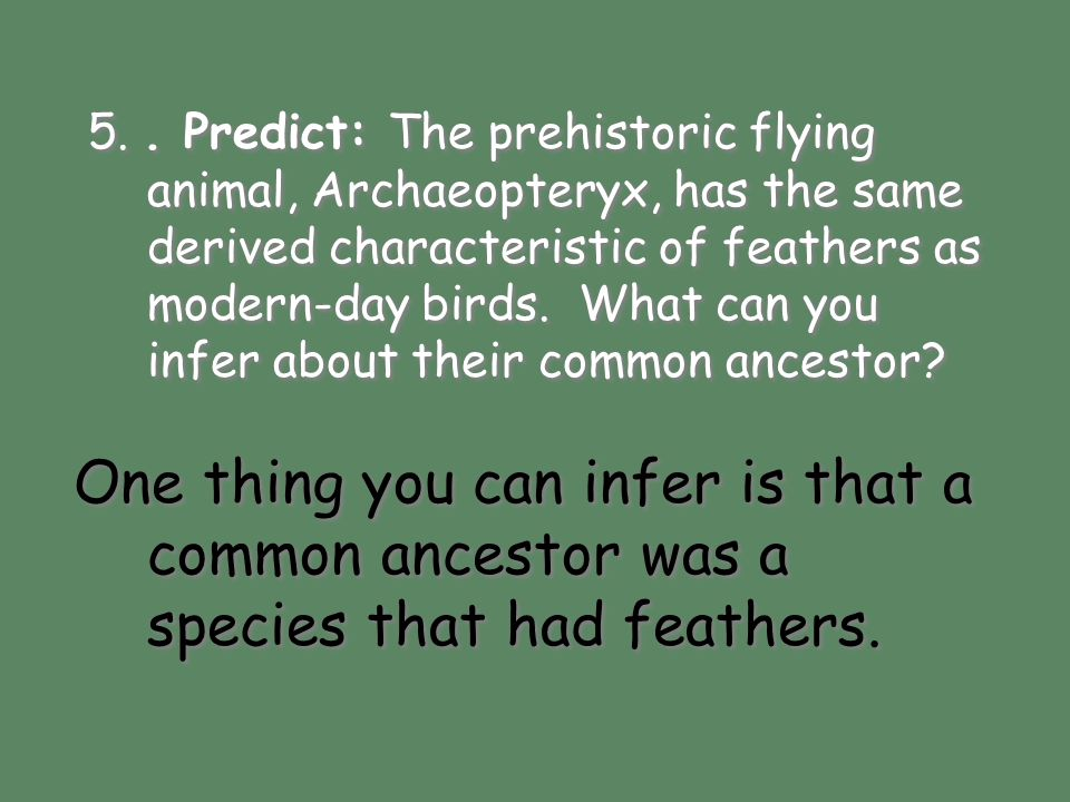 5. . Predict: The prehistoric flying animal, Archaeopteryx, has the same derived characteristic of feathers as modern-day birds. What can you infer about their common ancestor