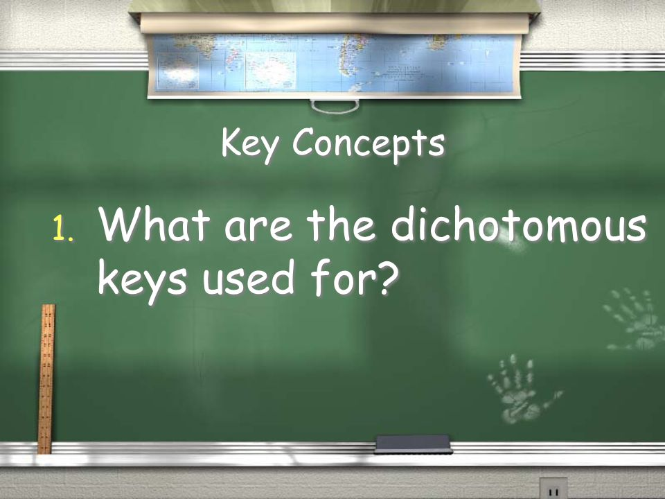 What are the dichotomous keys used for