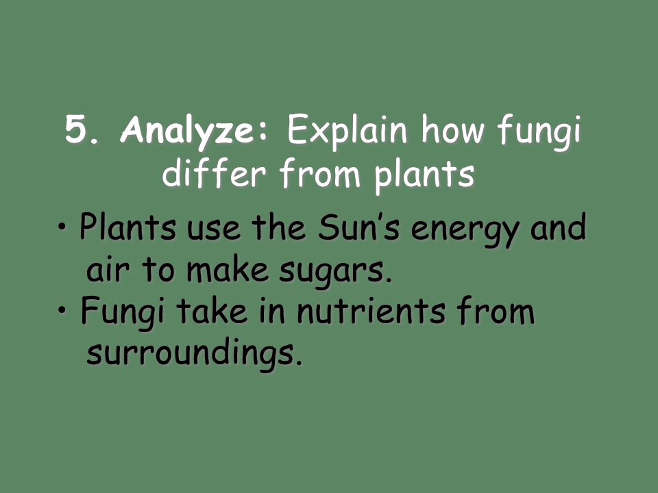 5. Analyze: Explain how fungi differ from plants