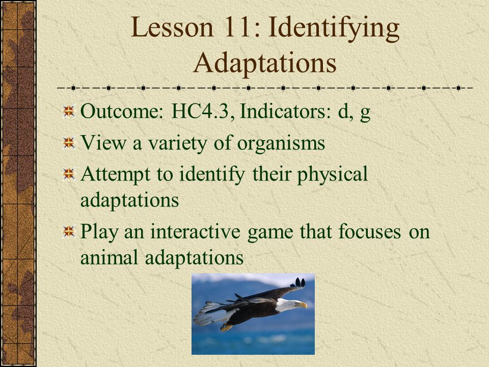 Lesson 11: Identifying Adaptations