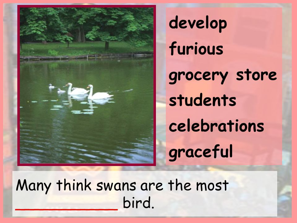 Many think swans are the most ___________ bird.