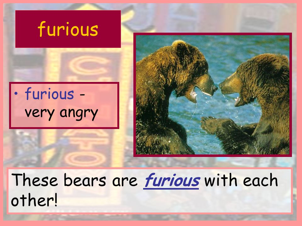 furious furious - very angry These bears are furious with each other!