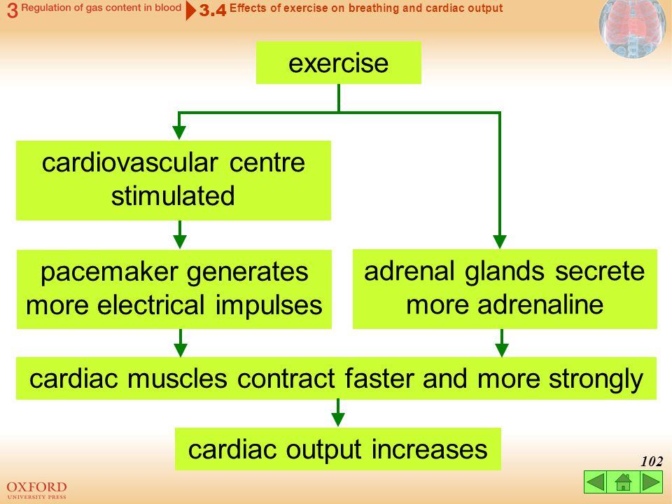 cardiovascular centre stimulated