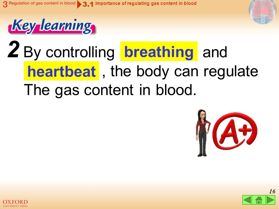 2 By controlling and breathing , the body can regulate heartbeat