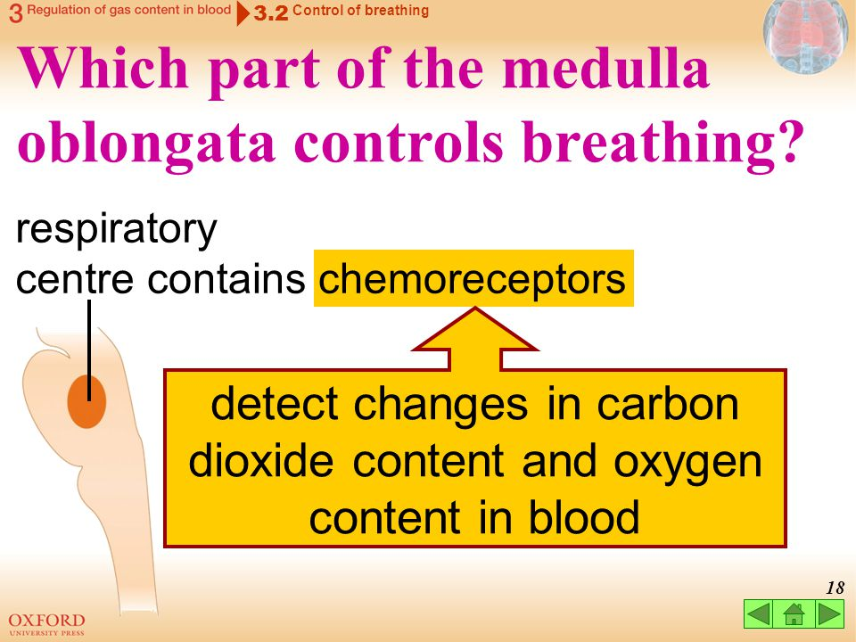 detect changes in carbon dioxide content and oxygen content in blood