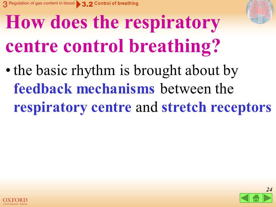 How does the respiratory centre control breathing