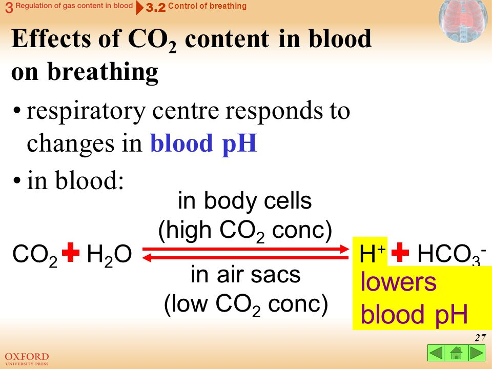 Effects of CO2 content in blood on breathing