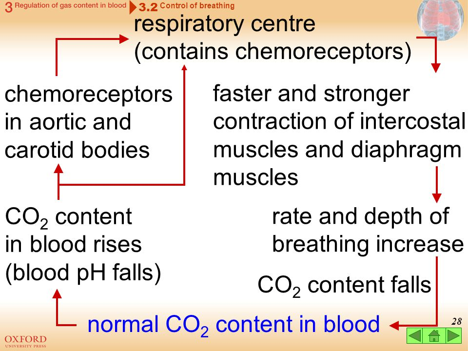 normal CO2 content in blood