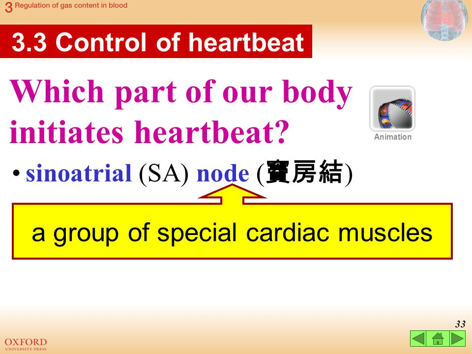 a group of special cardiac muscles