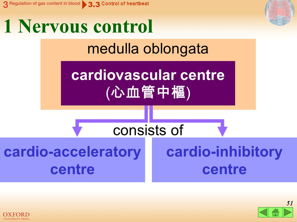 1 Nervous control medulla oblongata cardiovascular centre (心血管中樞)