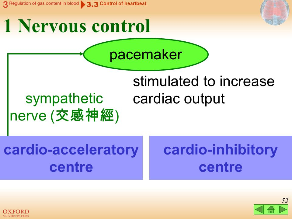cardio-acceleratory centre cardio-inhibitory centre