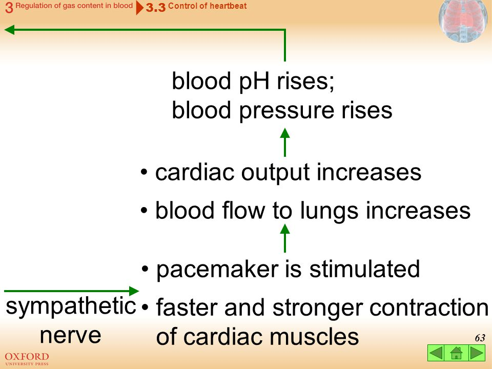 blood pH rises; blood pressure rises
