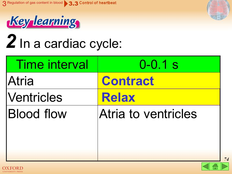 2 In a cardiac cycle: Time interval 0-0.1 s Atria Ventricles