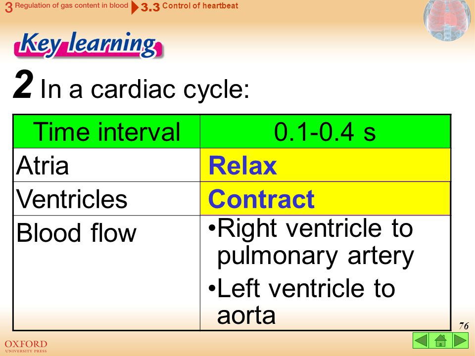 2 In a cardiac cycle: Time interval 0.1-0.4 s Atria Ventricles