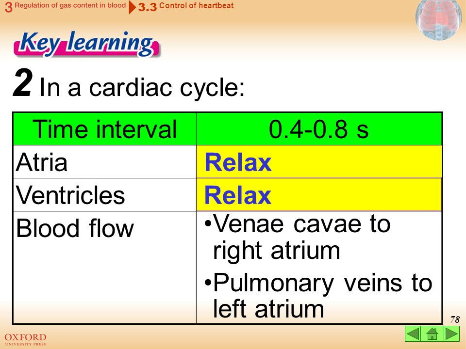 2 In a cardiac cycle: Time interval 0.4-0.8 s Atria Ventricles