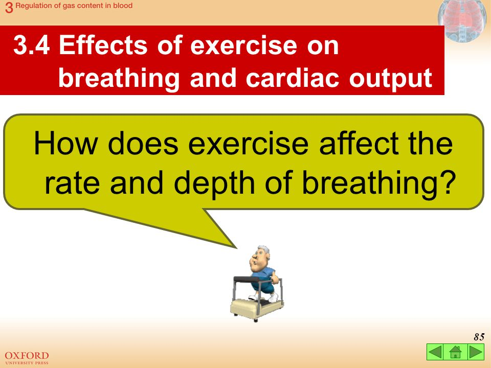 How does exercise affect the rate and depth of breathing