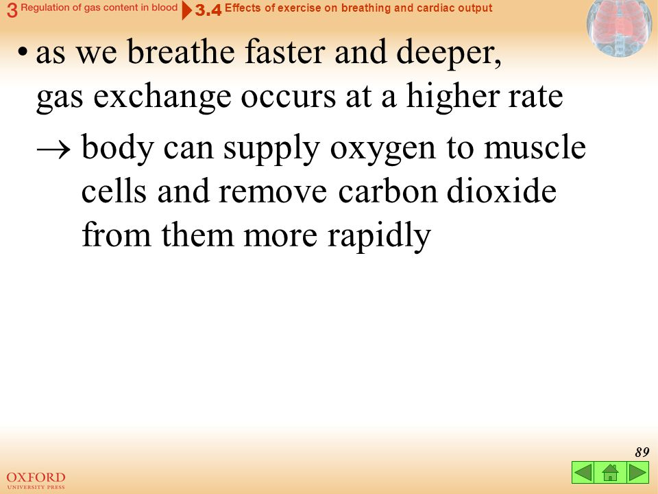 as we breathe faster and deeper, gas exchange occurs at a higher rate