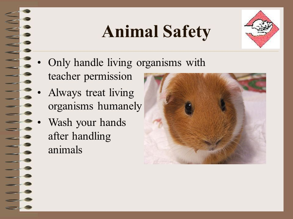 Animal Safety Only handle living organisms with teacher permission