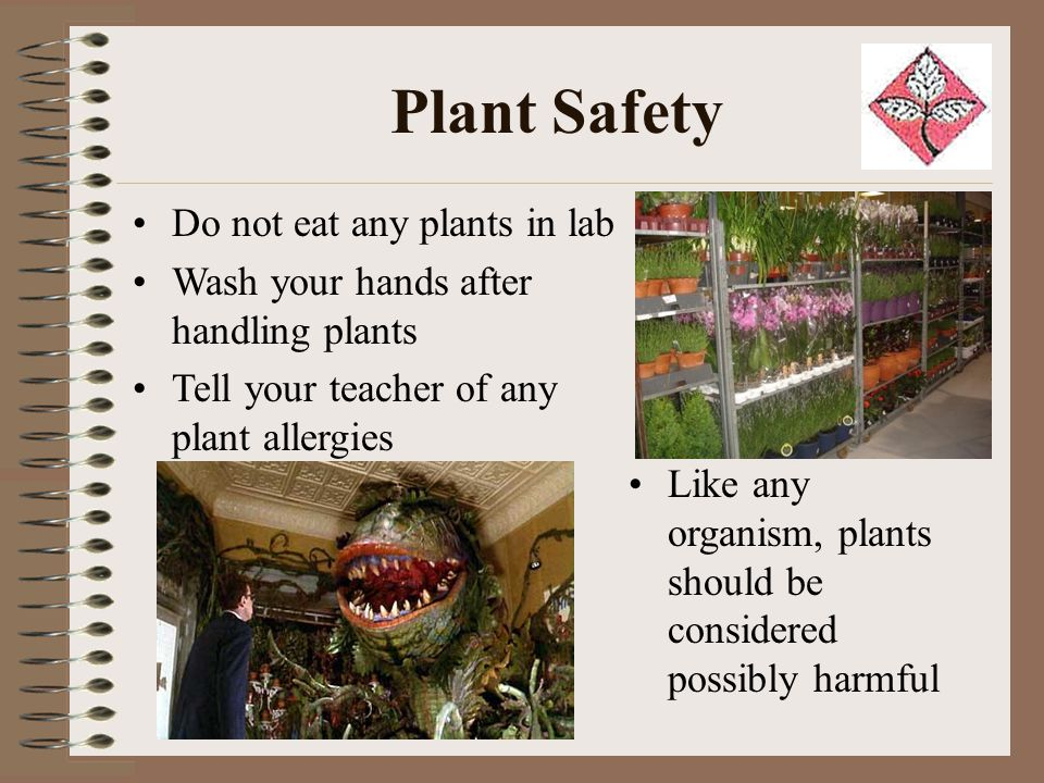 Plant Safety Do not eat any plants in lab