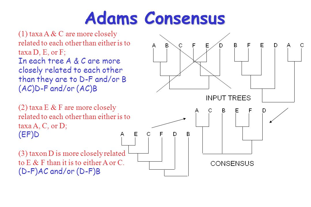 Adams Consensus (1) taxa A & C are more closely related to each other than either is to taxa D, E, or F;