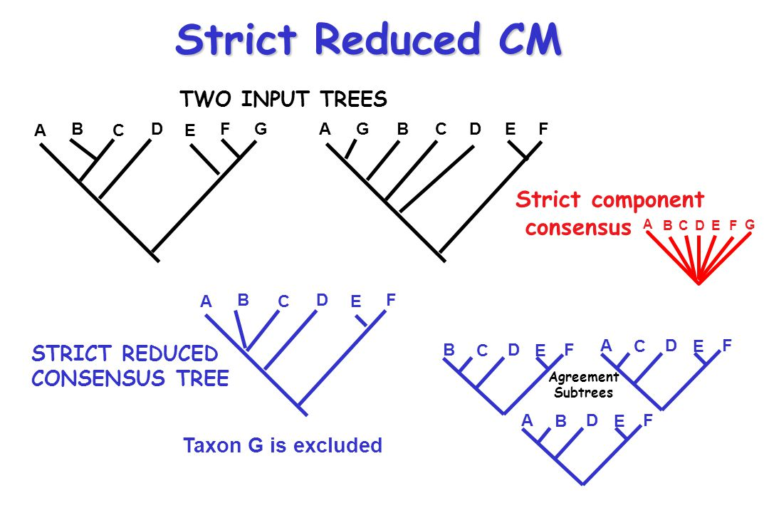 Strict Reduced CM Strict component consensus TWO INPUT TREES
