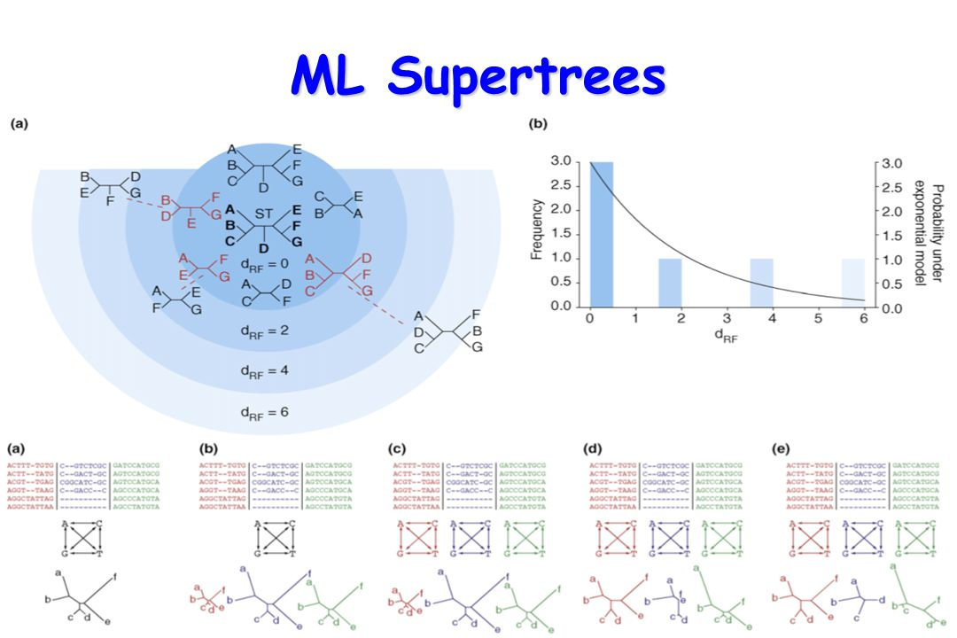 ML Supertrees