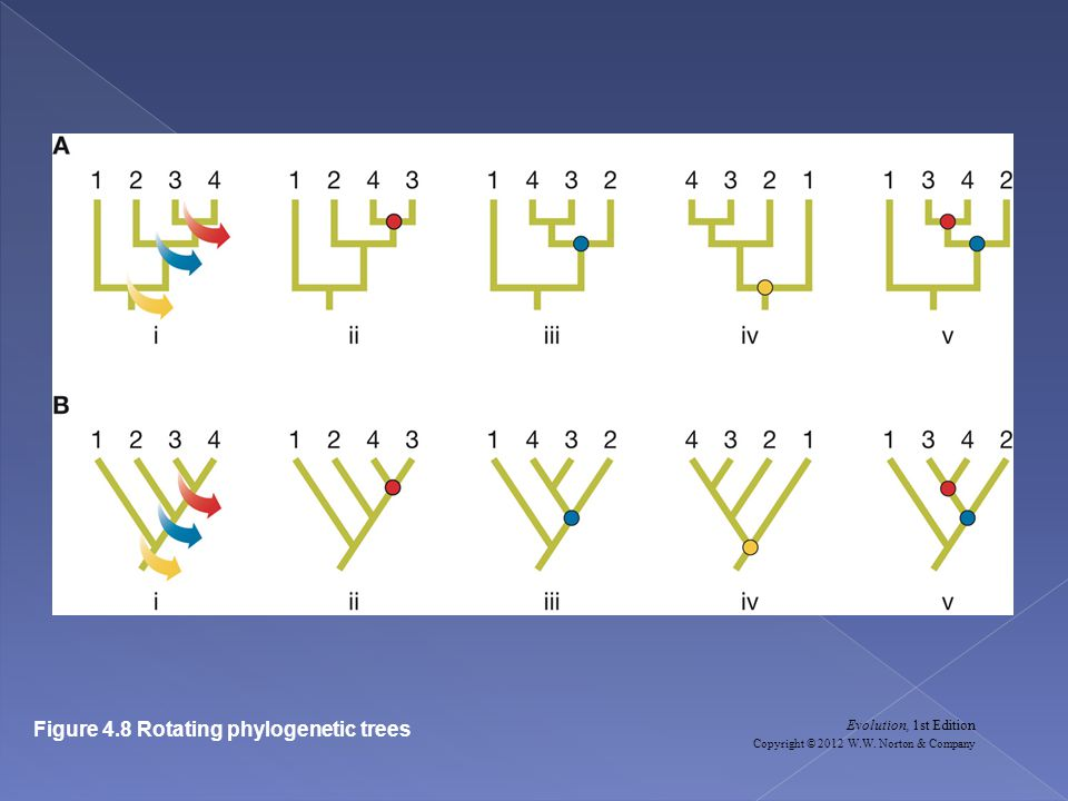 Figure 4.8 Rotating phylogenetic trees