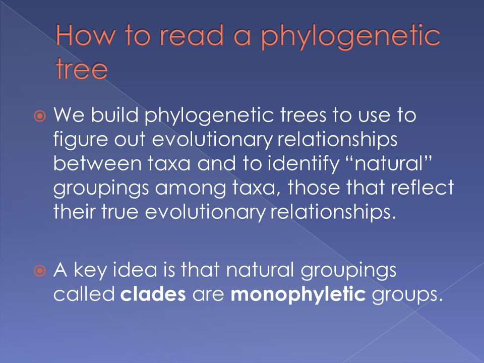How to read a phylogenetic tree