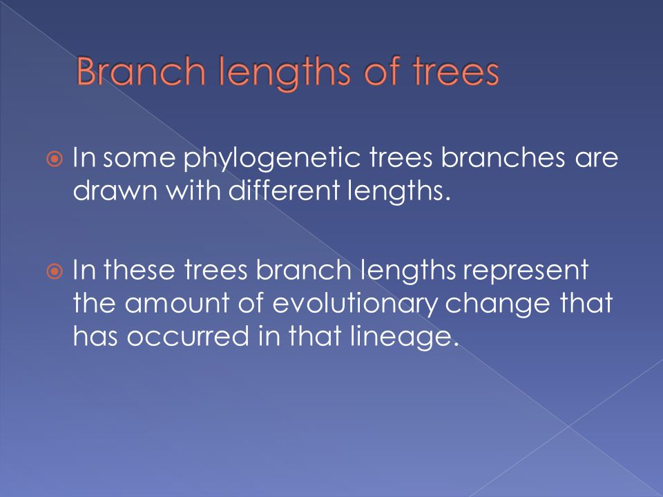 Branch lengths of trees